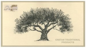 History of Olive Tree and Olive Oil